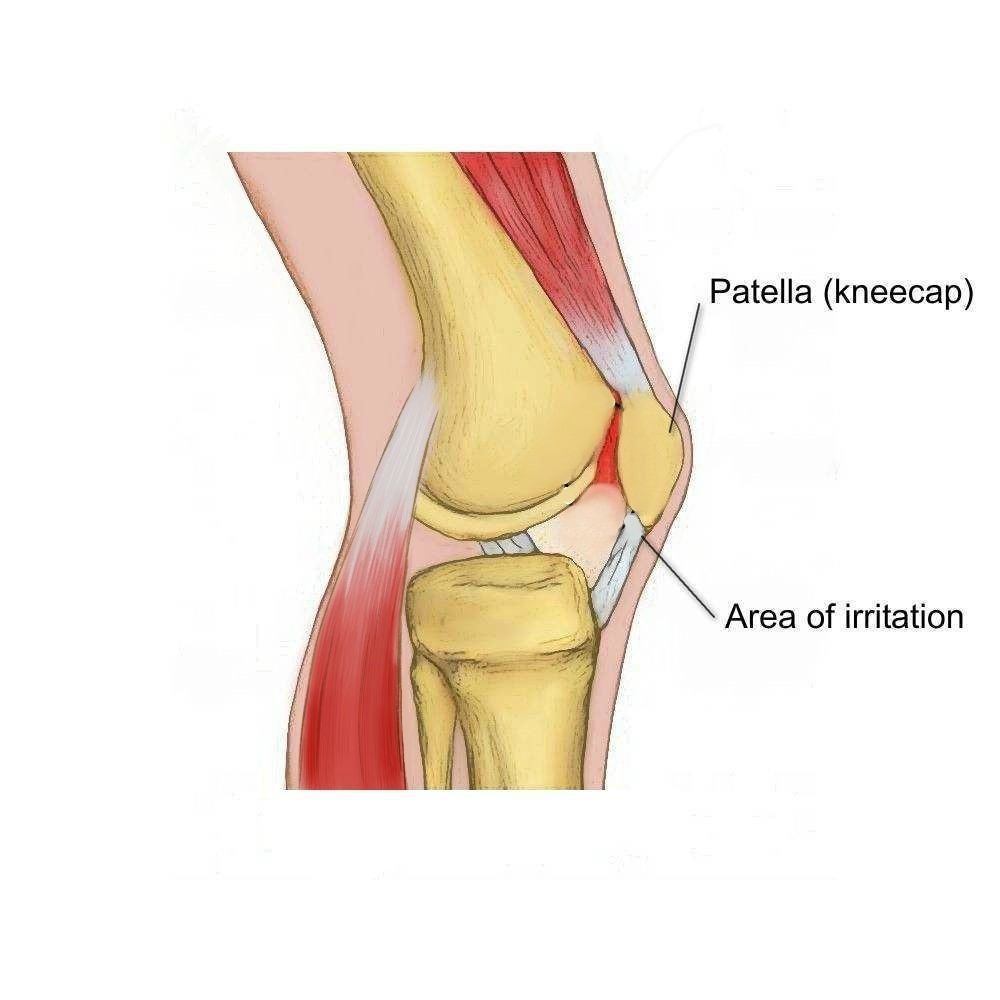 Knee Muscle Diagram